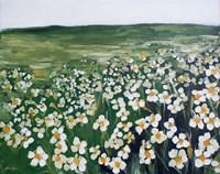 Chamomile Field Fine Art Print