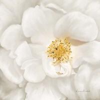 Neutral Rose No. 4 Framed Print