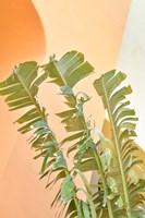 Tropical Dream II Framed Print