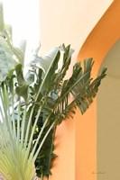 Tropical Dream V Framed Print