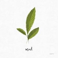 Herbs VII White Fine Art Print