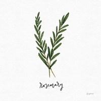 Herbs III White Fine Art Print
