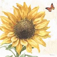 Sunflower Splendor IX Fine Art Print