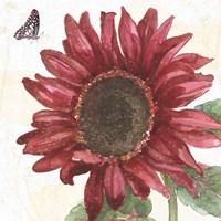 Sunflower Splendor X Fine Art Print