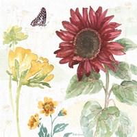 Sunflower Splendor VI Fine Art Print