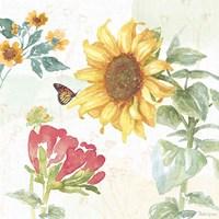 Sunflower Splendor VIII Fine Art Print