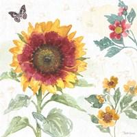 Sunflower Splendor VII Fine Art Print