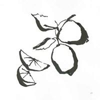 Limes BW Fine Art Print