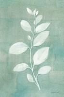 Sage Leaves II Framed Print