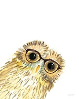 Owl in Glasses Fine Art Print