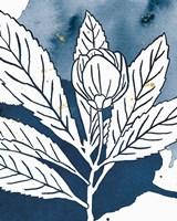 Indigo Blooms IV Framed Print