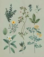 Victorian Garden V Framed Print