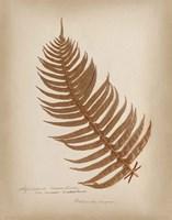 Ferns in Book V Burgundy Framed Print