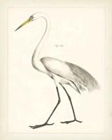 Vintage Heron II Framed Print
