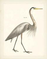 Vintage Heron I Framed Print