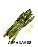 Veggie Sketch I-Asparagus Framed Print