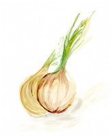 Veggie Sketch plain X-Onion Framed Print
