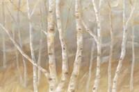 Autumn Birch landscape Framed Print