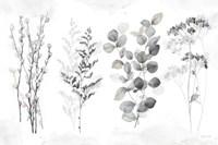 Indigo Botanicals landscape neutral Fine Art Print