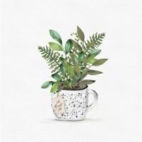 Botanical Mug II Fine Art Print