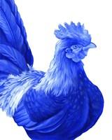 Blue Rooster I Fine Art Print