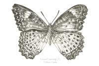 Butterfly Sketch landscape I Fine Art Print