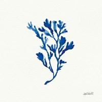 Deep Sea Botanical II Framed Print