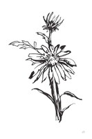 Line Echinacea I Framed Print