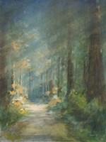 Sun Soaked Redwoods Fine Art Print