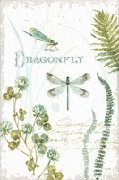 My Greenhouse Botanical Dragonfly Framed Print