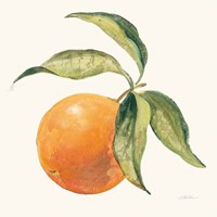 Le Orange on Cream Framed Print