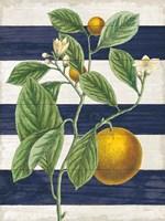 Classic Citrus VI Navy Shiplap NW Framed Print