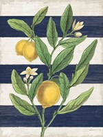 Classic Citrus V Navy Shiplap NW Fine Art Print