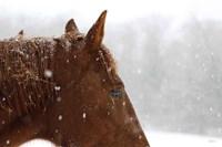 Snowy Caleb Framed Print