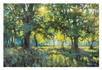 Through Silent Trees Fine Art Print
