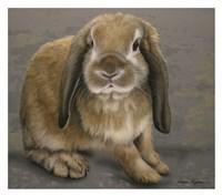 Lop-eared Bunny Fine Art Print