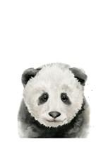 Baby Panda Fine Art Print
