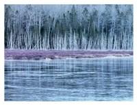 Cold Autumn Fine Art Print