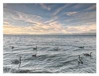 Lake Tahoe Geese Fine Art Print