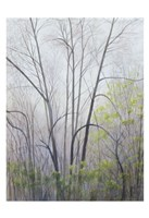 Early Spring Fine Art Print