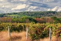 Wine Country Beneath Cloudscape Fine Art Print