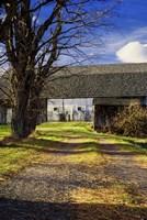 Abandon Barn And Lane Fine Art Print