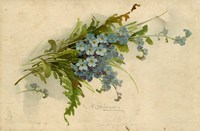 Forget-Me-Not Fine Art Print