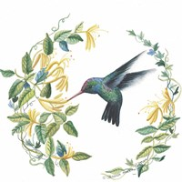 Male Broad Billed Hummingbird Fine Art Print