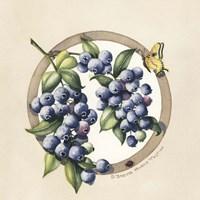 Blueberries Framed Print