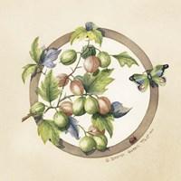 Gooseberries Framed Print