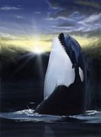 Orca Sunset Fine Art Print