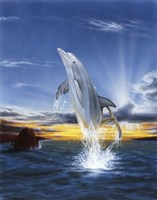 Leaping Dolphin Fine Art Print