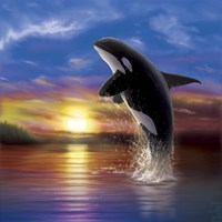 Orca Sunrise Fine Art Print