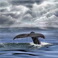 Whale Fluke Fine Art Print